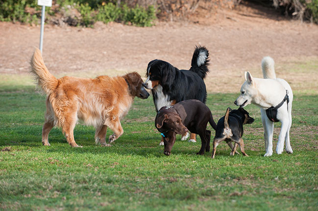 possibly aggressive dogs in dog park