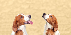 blog two dogs even closer.jpg
