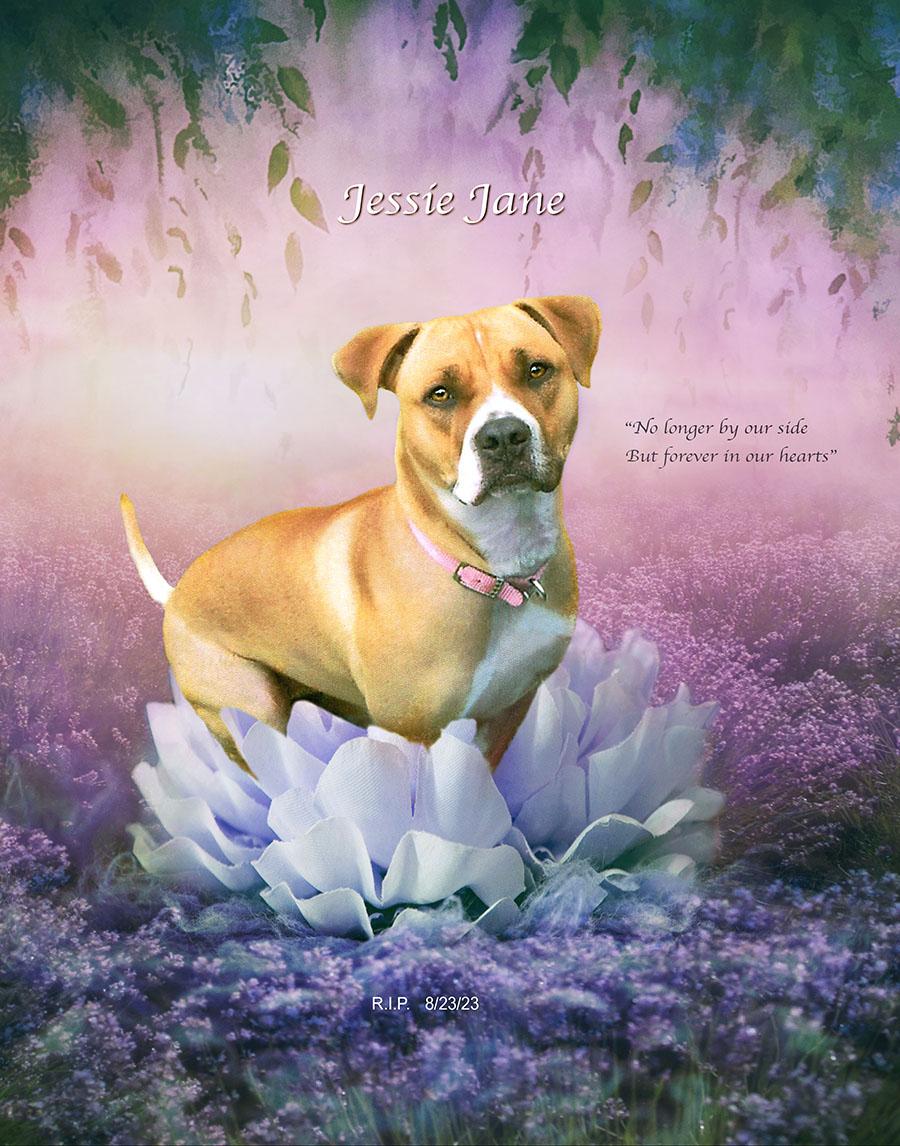 Jessie Jane 72ppi
