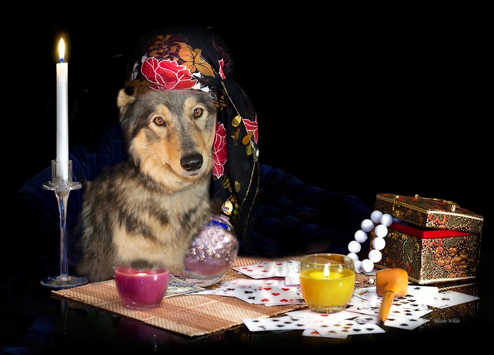 dog fortune teller