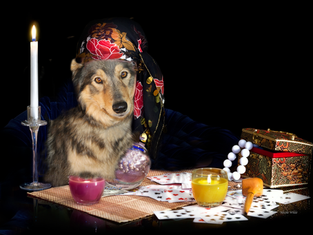 Do You Expect Your Dog to be Psychic?