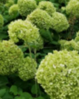 green flowers .jpeg