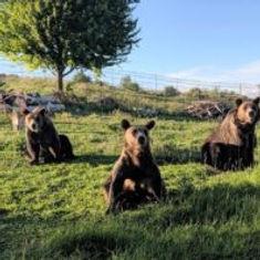 bear-musketeers-198x198.jpg