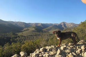 mountain retreat dog walk