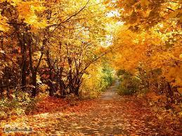 Incontri d'autunno per genitori adottivi