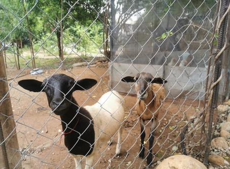 Une mini ferme dans Tierra en Armonia.