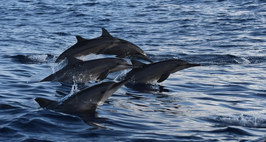 Did you dream of seeing dolphins in the sea? Adventure awaits you from the beach. from Puerto Angelito. Embark on a ten-place boat and go out to meet dolphins, whales (between November and March) and turtles. You can even swim with them if you feel like it.