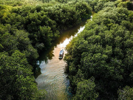 From the villas, you can venture to the Chacahua lagoon, where for a whole day. First you will be guided to the city of Zapotalito, you will take a boat and navigate the floating islands formed by mangroves.