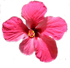 flower-3391570_1920.png