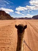 Wadi-Rum-Camel-Tour.jpg