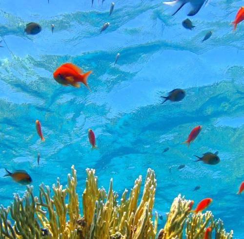 snorkel-mar-rojo.jpg