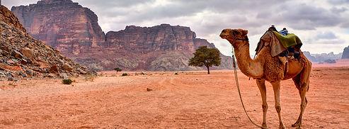 wádí rum camel.jpg
