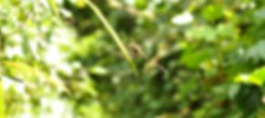 DSC_0121A.jpg
