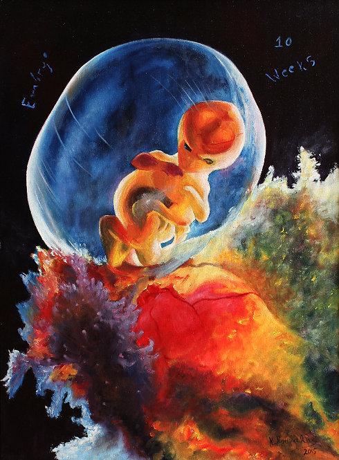 Fetus 10 weeks