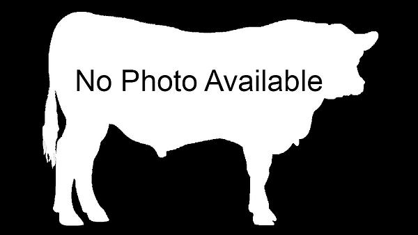 Generic Bull Image.png