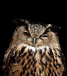 eagle-owl-172313928_959x1098-removebg-pr