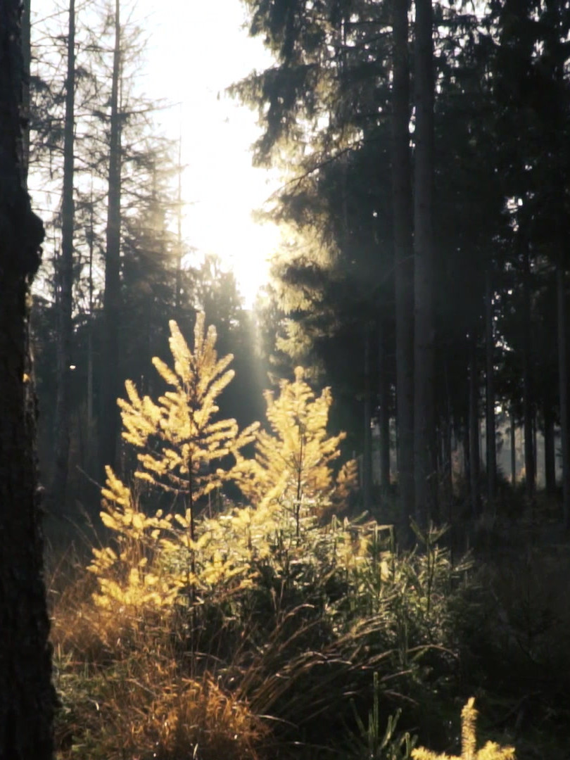 mixkit-forest-in-the-sunlight-3007.mp4
