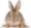 png-transparent-easter-bunny-rabbit-hare
