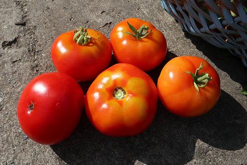 Огонёк томат (доставка только по России)
