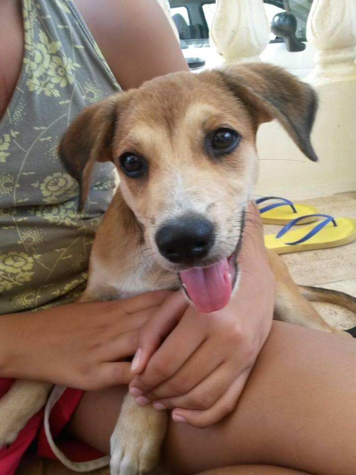 Aruban Rescue Pup