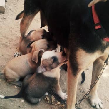 Aruba's Rescued Puppies