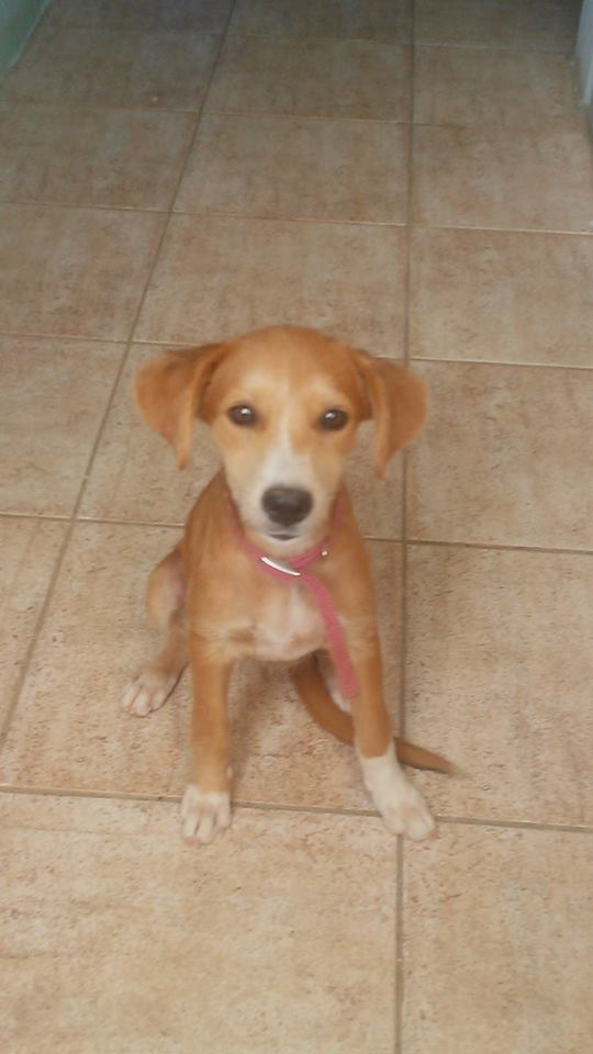 Rescue Puppy New Life For Paws