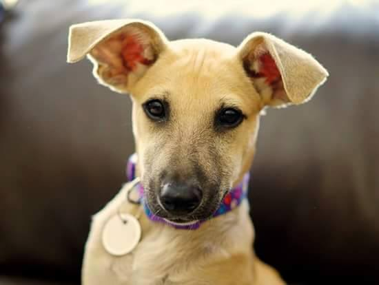 New Life For Paws Rescue Dog