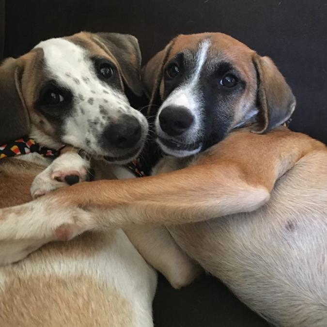 Aruba Pups Reunited Stateside