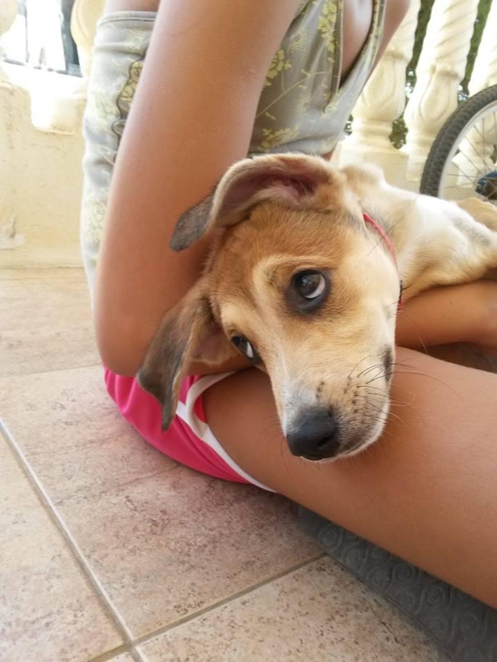 Happy Puppy Rescue