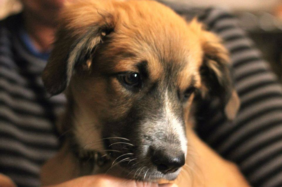 Rescue Pup Aruba Flight Volunteers