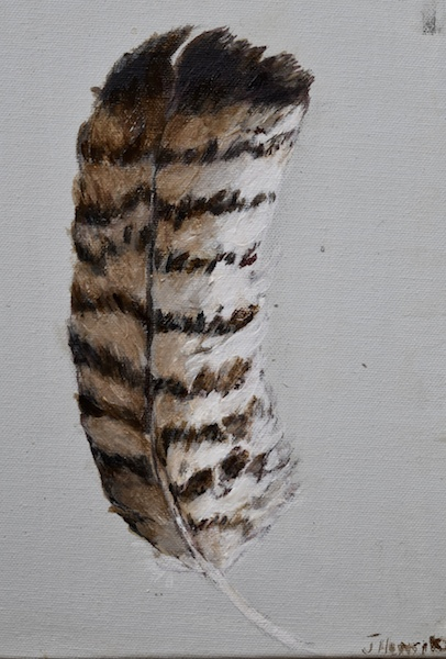 Hawk Feather 1 (canvas)-6x8""