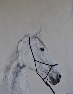 "Cheval Visionnaire 48x39"" (canvas)"