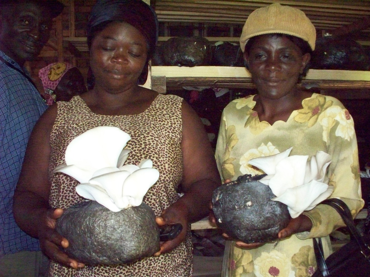 The joy of realising the first fruits of the Mbeng-Adio mushroom  farm