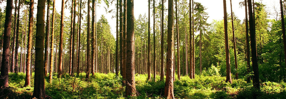 forest_stock_23_by_sed_rah_stock1.jpg
