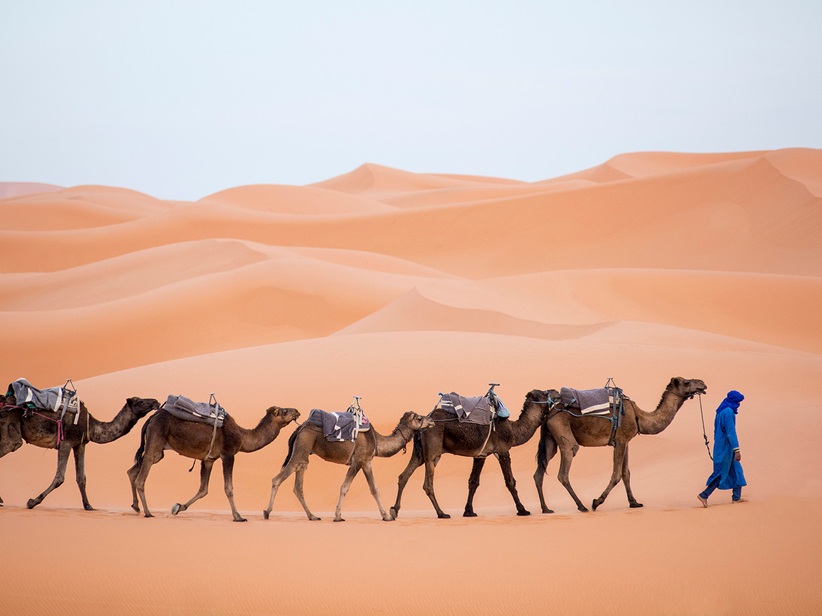 Camel Jpeg Framebridge2.jpg