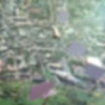 DSC_7035web.jpg