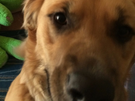 This is my dog, and this is my blog