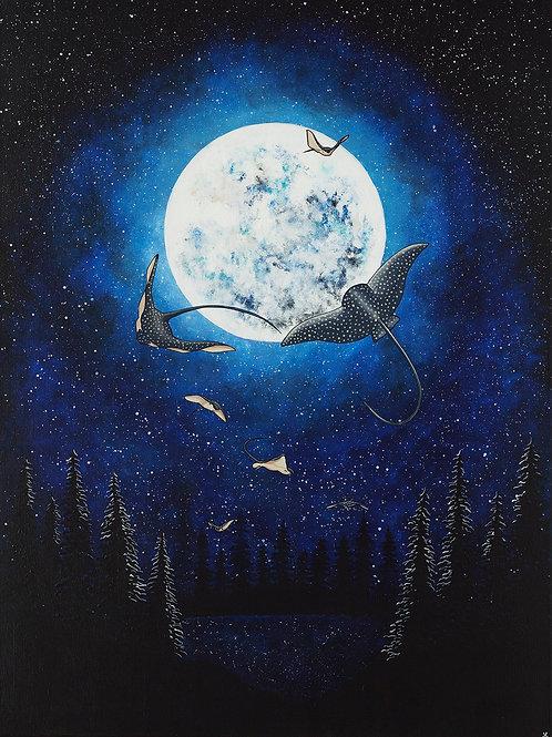 Ocean Nocturne