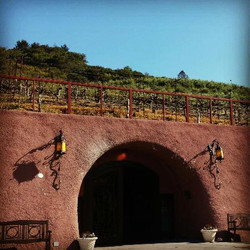 petroni-vineyards
