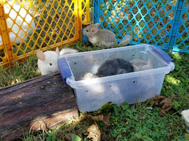 Lets jump right in! Outside time for your exotic animals: good or bad?
