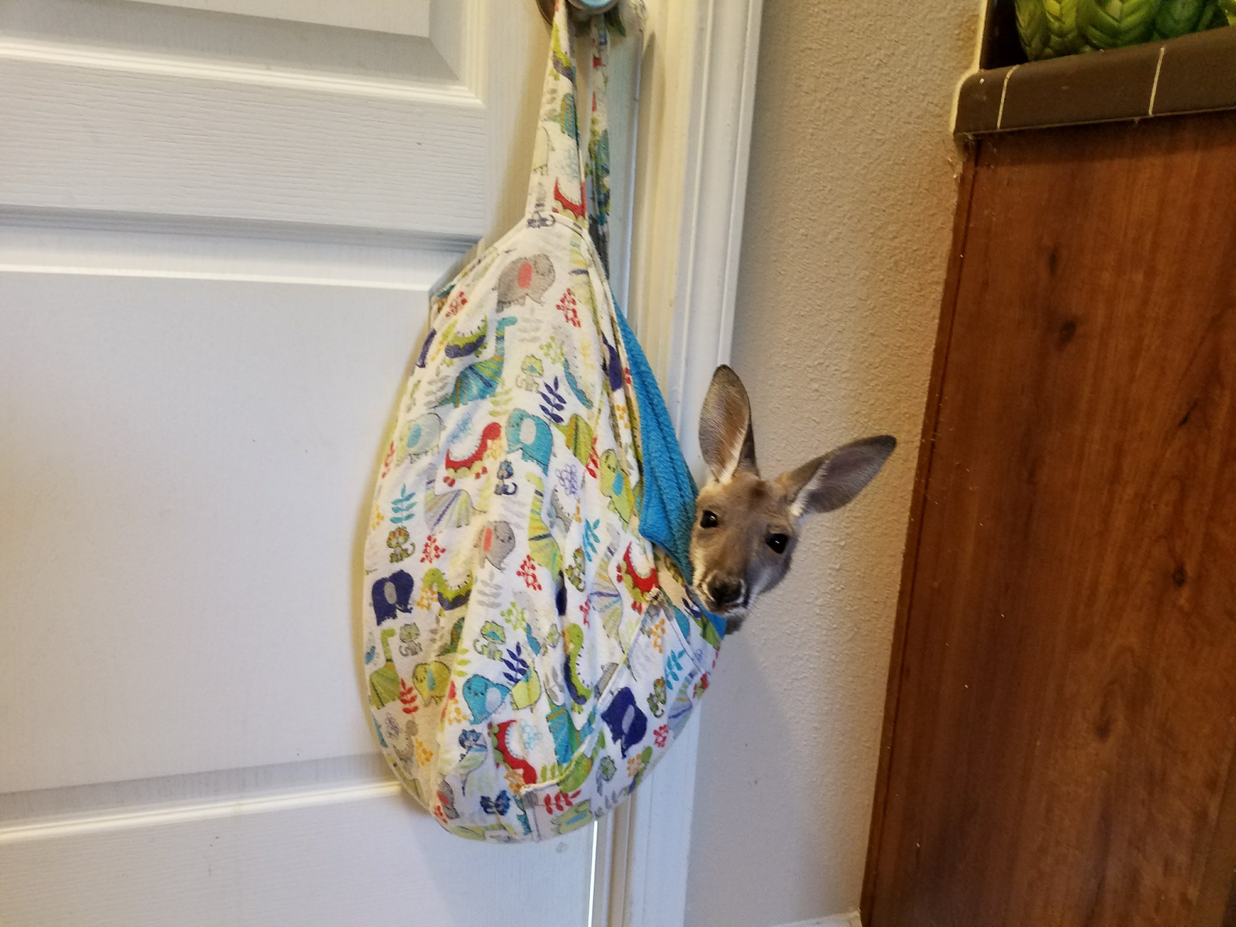 Pouch Baby