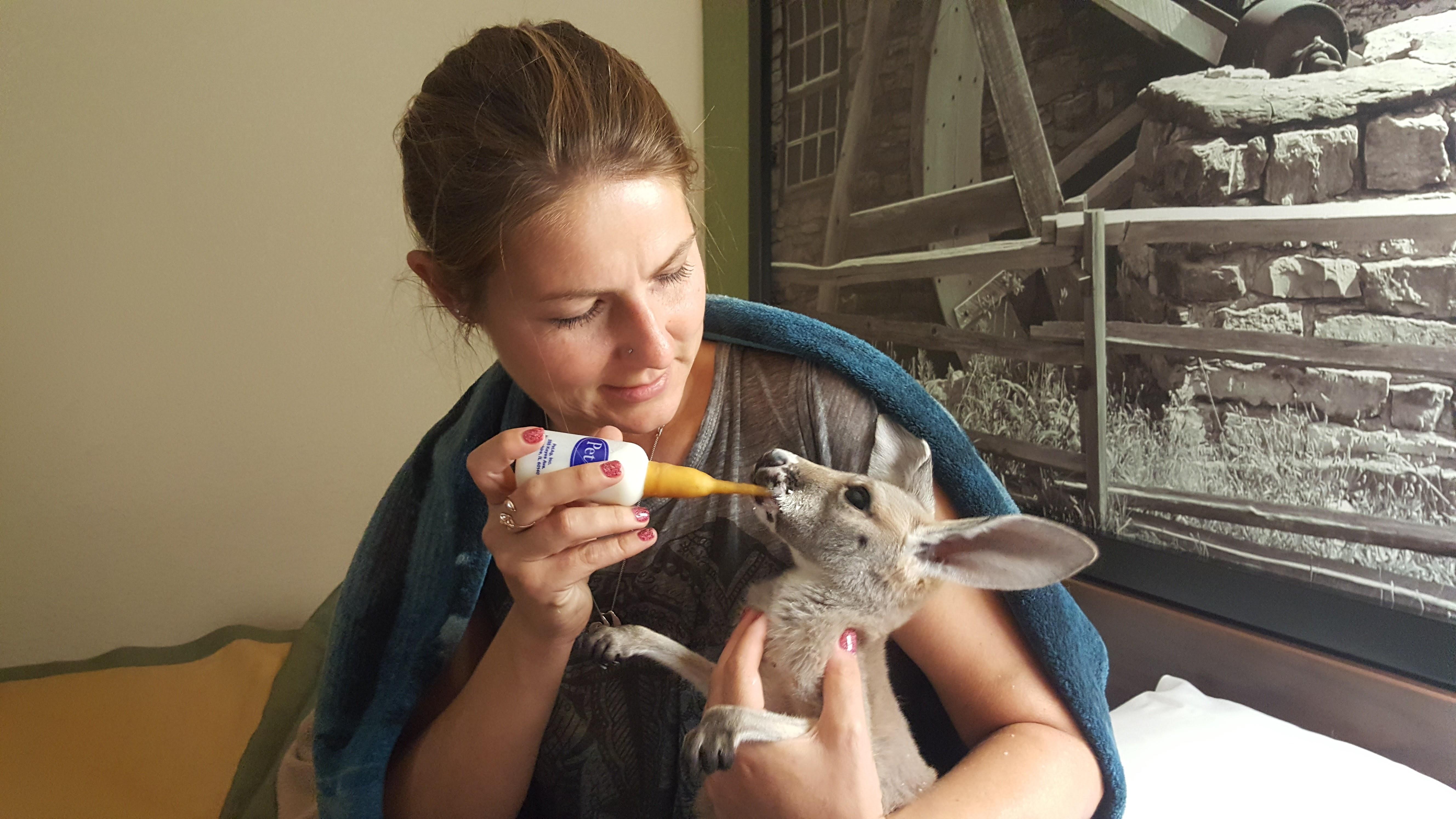 Bottle Baby Kangaroo- Ashley Duncan