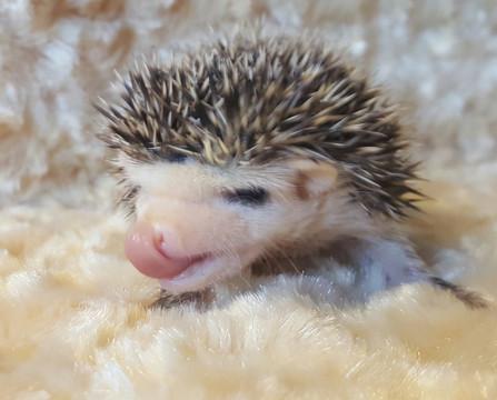 cutehedgehog.jpg