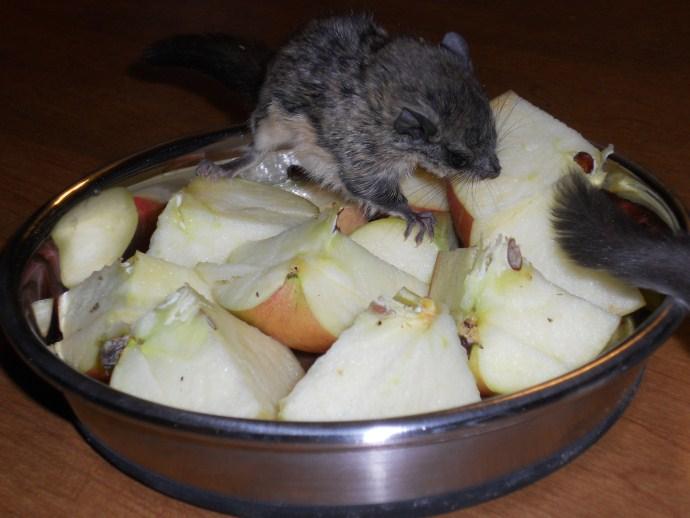 Flying Squirrel Diet