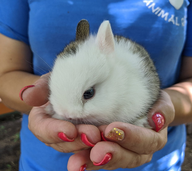 Baby Bunny June- Tame PRICE-$60