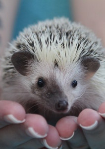 Splithedgehog.jpg