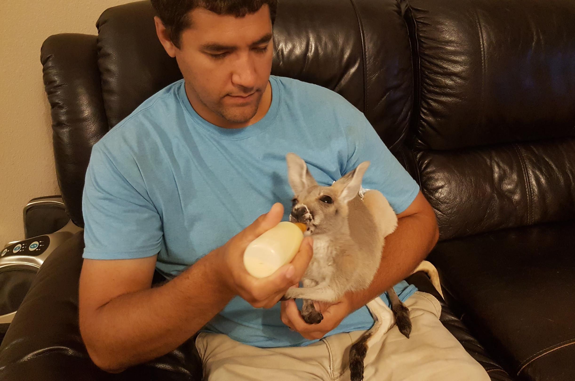 Bottle Baby Kangaroo- Jason Duncan