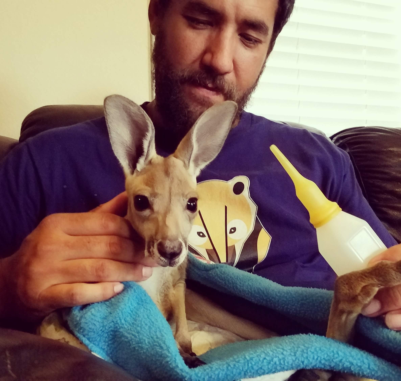 New Baby Kangaroo- Pretty!