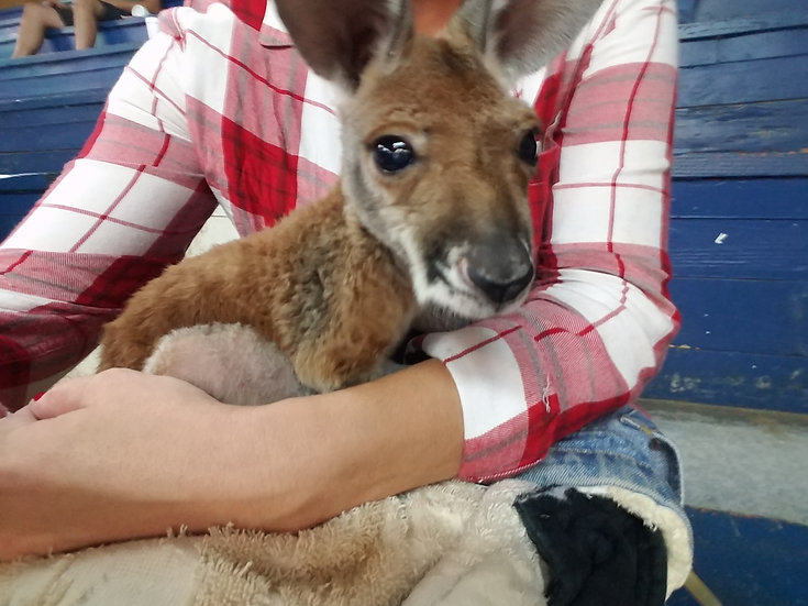 Male Baby - $2900