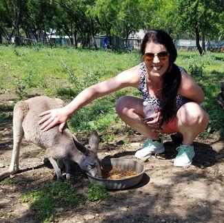 Kangaroo Enclosure